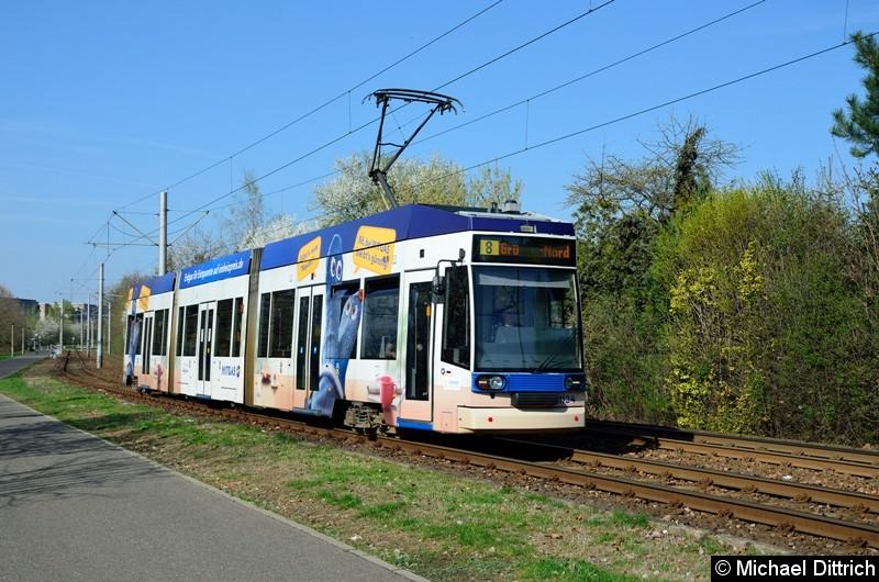 1134 als Linie 8 kurz vor der Haltestelle Strbf. Paunsdorf.